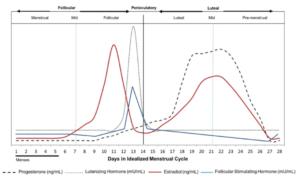 Der weibliche Zyklus - eine Hormonachterbahn